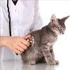 Ветеринарные клиники в Ныробе